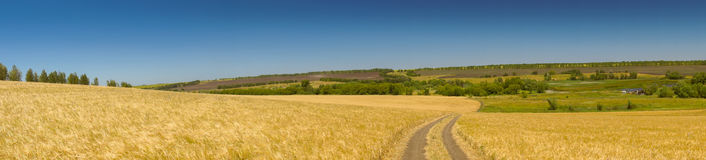 Free Russian Expanses. Field Royalty Free Stock Image - 96887076