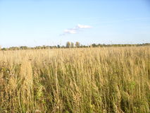 Russian field  Русское поле. Russian field, the horizon and the sky near Rybinsk Royalty Free Stock Images