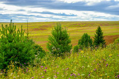 Russian field. Hay, trees, yellow grass Royalty Free Stock Images