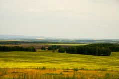 Russian field. Siberia. Meadow field somewhere in cent in the central part of Siberia Royalty Free Stock Photography