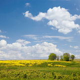Russian field. Sky and flowers. Royalty Free Stock Image
