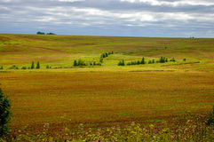 Russian field. Field of yellow grass, trees, ravines, the sky Stock Images
