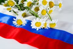 Russian flag and camomiles Royalty Free Stock Photos