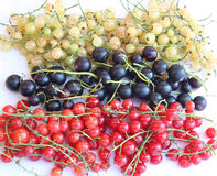 Russian flag in currant version. The Russian flag. The currant version. Berrys Royalty Free Stock Photography