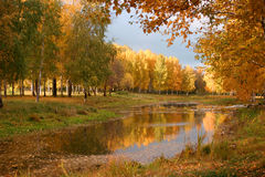 Russian forest. At the autumn season Royalty Free Stock Photo