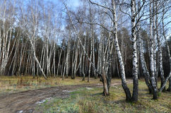Russian forest in autumn Royalty Free Stock Photography