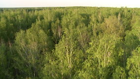 Russian forest landscape aerial view stock video