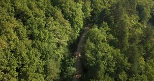 Russian Forest And Mountains Under Blue Sky By Aerial Drone. Stunning Aerial Drone Stock Footage of South russian Forest And Mountains Under Blue Sky stock video