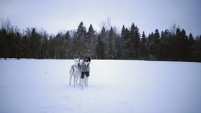 Russian greyhound on winter nature. Two dogs playing in the snow field stock footage