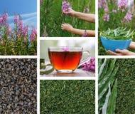 Russian herbal tea also called kiprei or koporka royalty free stock photo