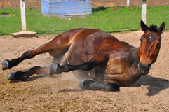 Russian Horse Stock Photo