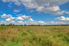 Russian landscape. Ordinary russian landscape with a wide field and skies Royalty Free Stock Images