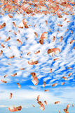 Russian money in sky. Stock Photography
