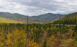 The Russian Mountain. Trees and mountain. Sayan range. Trees over the clouds Stock Photos