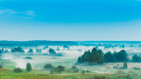 Russian Nature Landscape, Late Summer Forest In Royalty Free Stock Photos