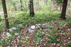 The garbage left after a picnic in the forest, Moscow suburbs, Russia. Russian nature-lovers often don`t dispose the wastes by the proper way, therefore, the Stock Photo