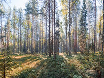Russian North National Park. National Park Russian North in Vologda region. Summer panorama royalty free stock photo
