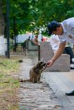 Russian policemen feeding raccoon in the park stock photo