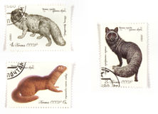Russian post stamps wildlife Stock Images