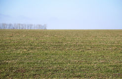 Russian prairie in winter. Stavropol Royalty Free Stock Photo