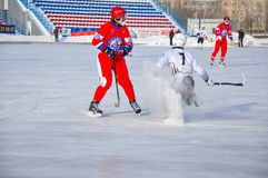 Game of bandy. Russian Premier League match ball hockey:  Lokomotiv  Orenburg  Universal  Saratov. 12.01.2013, city of Orenburg, Southern Ural, Russia Stock Photo