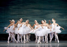 Russian royal ballet perfome Swan Lake Lake Stock Image