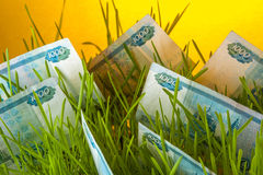 Russian ruble banknotes in green grass Royalty Free Stock Image