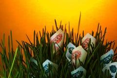 Russian ruble bills among green grass Stock Photo