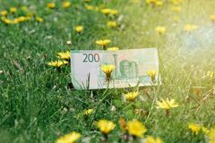 Russian rubles on green grass and dandelion fields royalty free stock photography