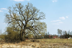 Russian rural landscape with oak and village Royalty Free Stock Photos