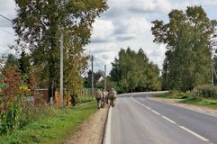Russian soldiers of special forces leave the village road for field exercises. View from the back. No recognizable person or logo. Autumn rural military stock photography
