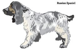 Russian Spaniel vector illustration. Portrait of standing in profile dog Russian Spaniel, vector colorful illustration isolated on white background Royalty Free Stock Images