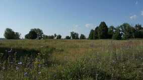 Russian summer field with trees view. Russian summer field with trees scenic view stock video