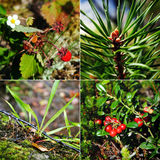Russian summer forest collage Stock Photo