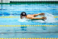 Russian Swimmer Swimming Butterfly Stroke In Pool Royalty Free Stock Image