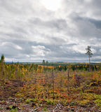 Russian taiga Royalty Free Stock Images