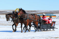 The Russian three of bay horses in sledge. BELOKURIKHA, RUSSIA - MARCH 12, 2016: The Russian three of horses during the holiday Farewell to winter Royalty Free Stock Photos