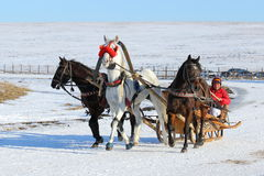 The Russian three with a gray stallion in the middle. BELOKURIKHA, RUSSIA - MARCH 12, 2016: The Russian three of horses during the holiday Farewell to winter Royalty Free Stock Image