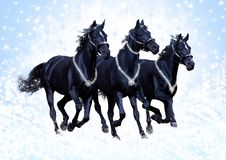 Russian troika. The mare of Kabardian breed gallops Stock Photo
