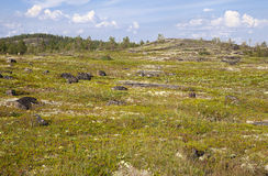 Russian tundra in summer Royalty Free Stock Image
