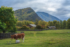 Russian village in the Altai Mountains Royalty Free Stock Images
