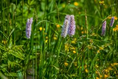 Green wildflowers and grasses. Russian wildflowers and green grasses stock photos