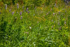 Green wildflowers and grasses. Russian wildflowers and green grasses royalty free stock photos