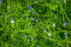 Green wildflowers and grasses. Russian wildflowers and green grasses royalty free stock photo