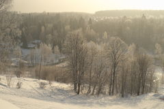 Russian winter. Birch in the frost. Cold Stock Photo