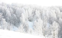 Russian winter in forest Royalty Free Stock Image