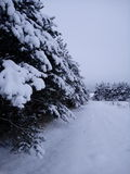 Russian winter forest Stock Images