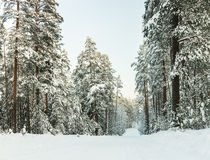 Russian winter forest road Royalty Free Stock Photography