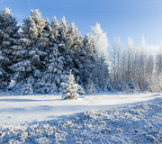 Russian winter forest road in snow Royalty Free Stock Photo