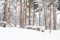 Russian winter forest in snow Stock Photography